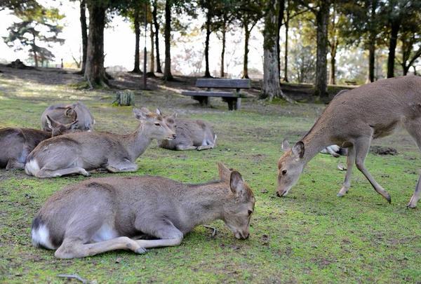 鹿と梅のコラボ