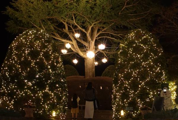 大きなヒマラヤ杉の木