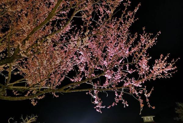箱根強羅公園の写真・動画_image_266417