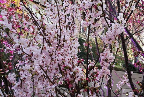 東京ミッドタウン日比谷 の写真・動画_image_266472