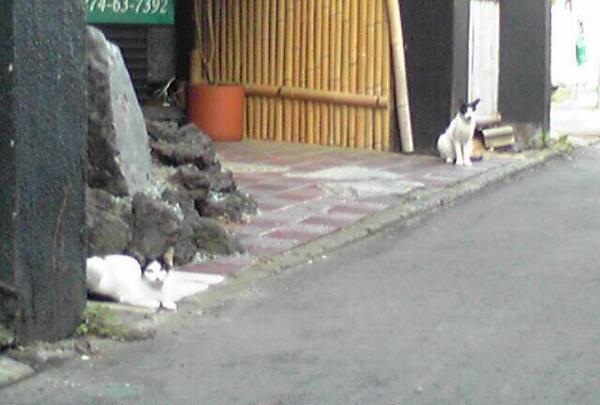 路地猫ちゃんにも会えちゃいます♡