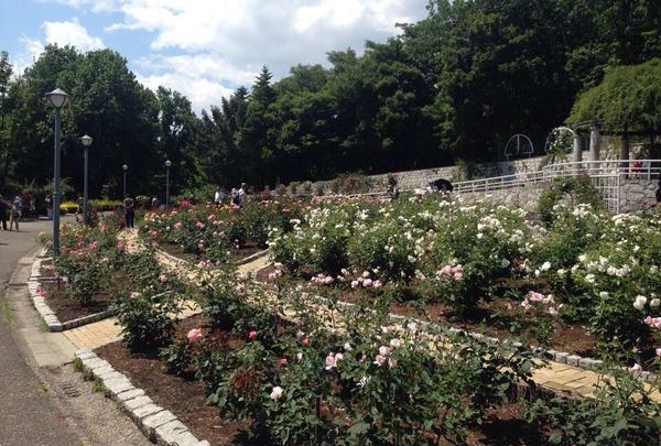 花博記念公園鶴見緑地の写真・動画_image_44885