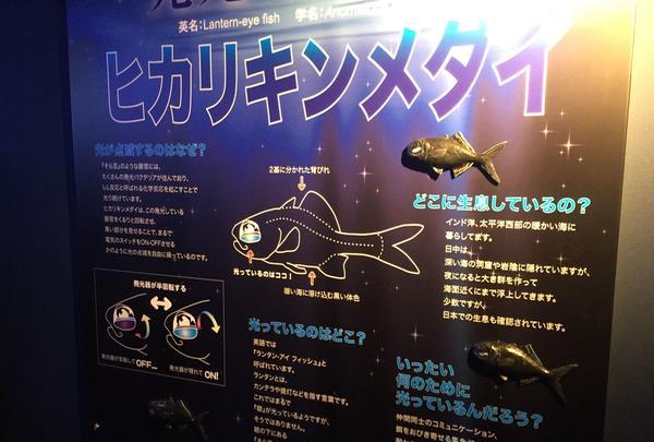深海のイルミネーション