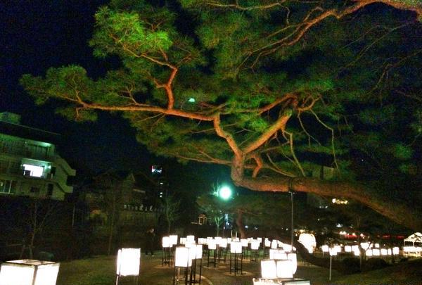 立派な松の枝