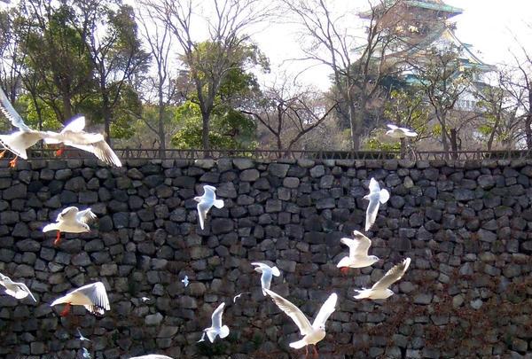 大阪歴史博物館の写真・動画_image_62787