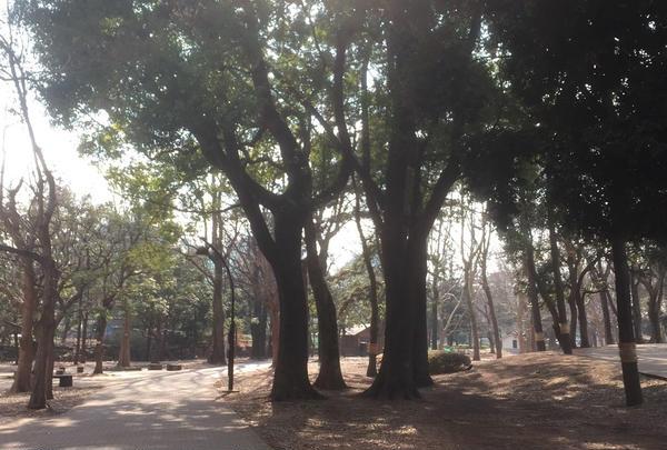 高い木がたくさん!