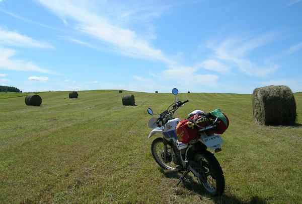 あちこちに牧草ロール