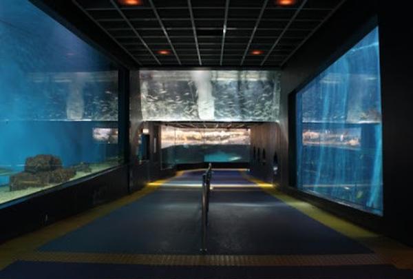 【雨の日のCプラン】箱根園水族館