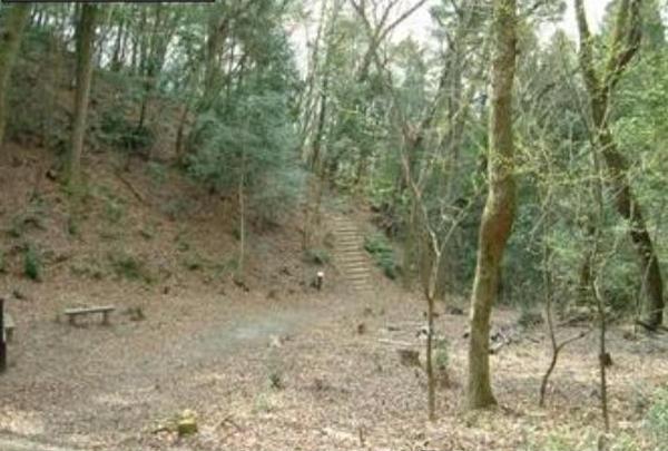 生駒台みんなの森の写真・動画_image_139892