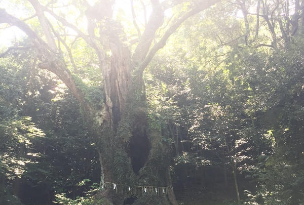 武雄の大楠の写真・動画_image_142123