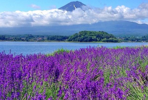 八木崎公園の写真・動画_image_143963