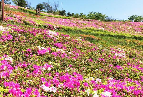 湘南国際村センターの写真・動画_image_175481