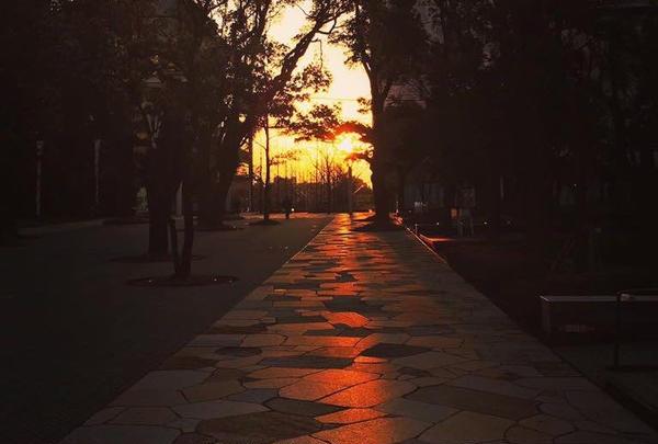 中野セントラルパークの写真・動画_image_179433