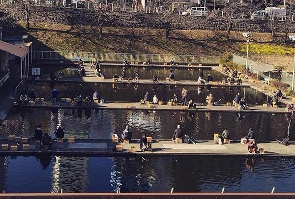 市ヶ谷フィッシュセンターの写真・動画_image_182966