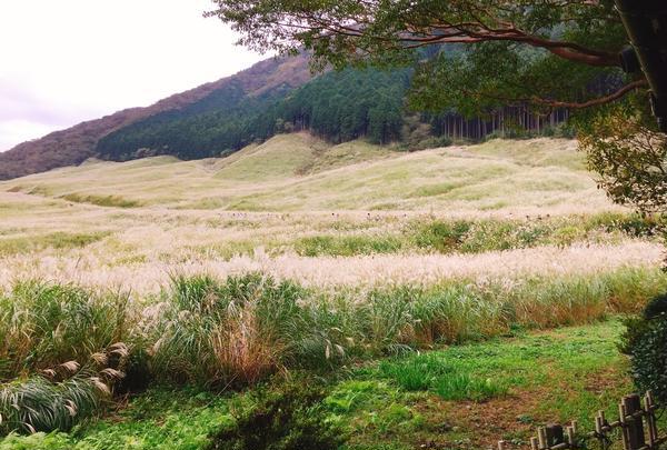 仙石原湿原植物群落の写真・動画_image_200081