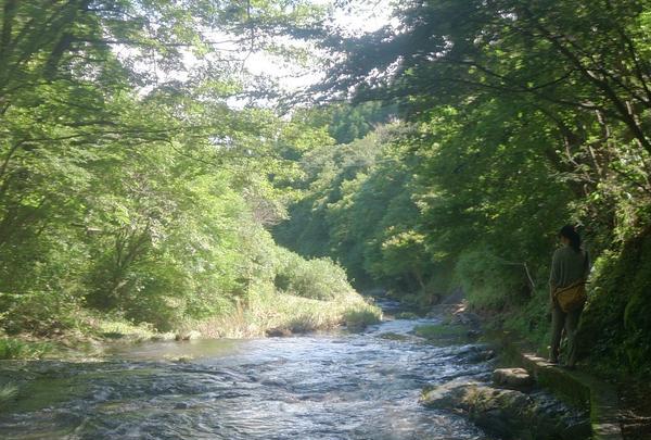 ゆうすい自然の森(旧 遊水峡キャンプ場)の写真・動画_image_202637
