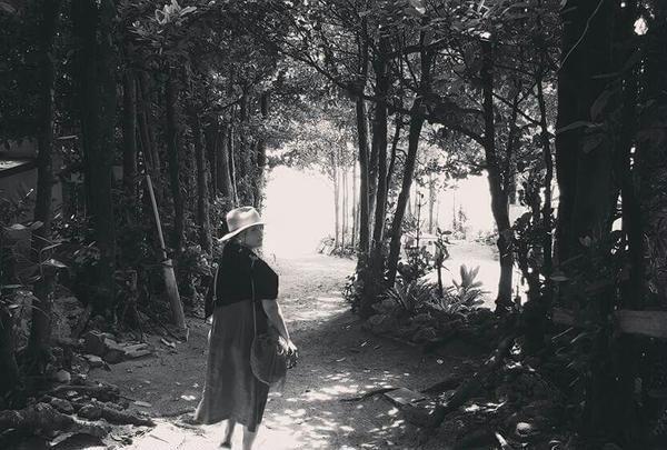備瀬のフクギ並木の写真・動画_image_229086