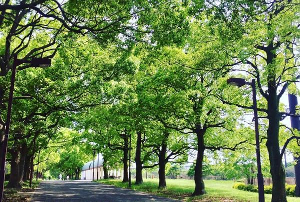大井ふ頭海浜公園の写真・動画_image_236018
