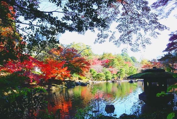 成田山公園の写真・動画_image_310283