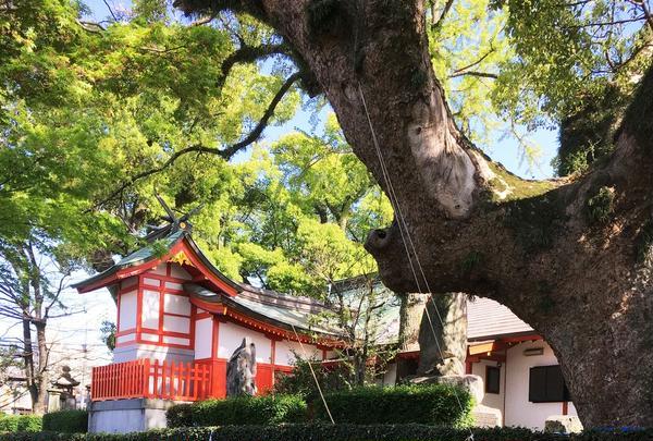 佐賀県護国神社の写真・動画_image_310465
