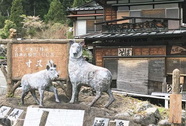 寸又峡温泉の写真・動画_image_318878