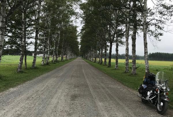 十勝牧場 白樺並木道