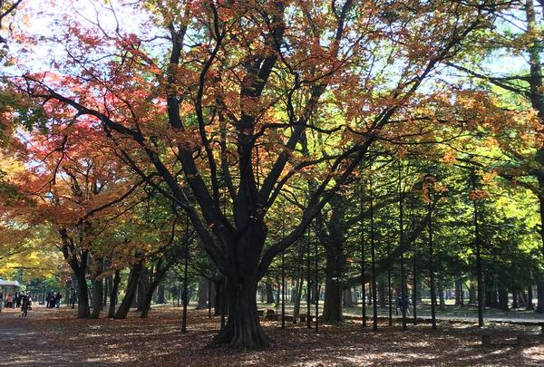 円山公園の写真・動画_image_449357