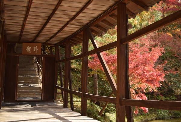 高台寺の写真・動画_image_453507