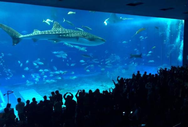 沖縄美ら海水族館の写真・動画_image_478619