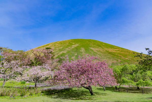 大室山の写真・動画_image_583288