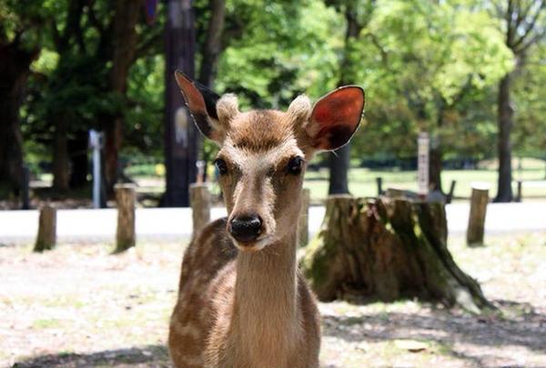 奈良公園の写真・動画_image_622613
