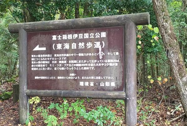 青木ヶ原樹海の写真・動画_image_672095