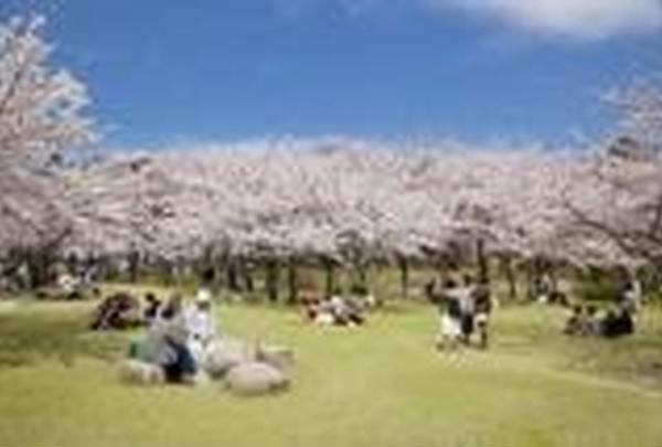 鳥屋野潟公園鐘木地区【桜の名所】