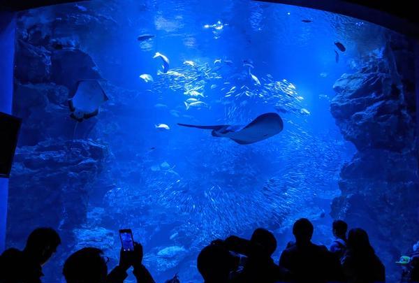 京都水族館の写真・動画_image_706445