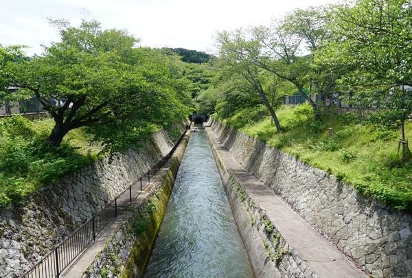琵琶湖疏水の写真・動画_image_721149