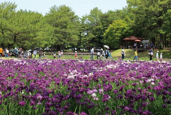 市民の森(阿波岐原森林公園)