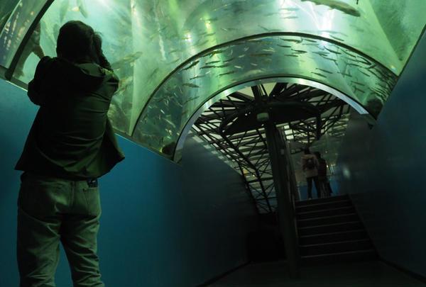 山梨県立富士湧水の里水族館 森の中の水族館。