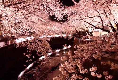 渋谷から20分桜も新緑も素晴らしい場所★成城学園前