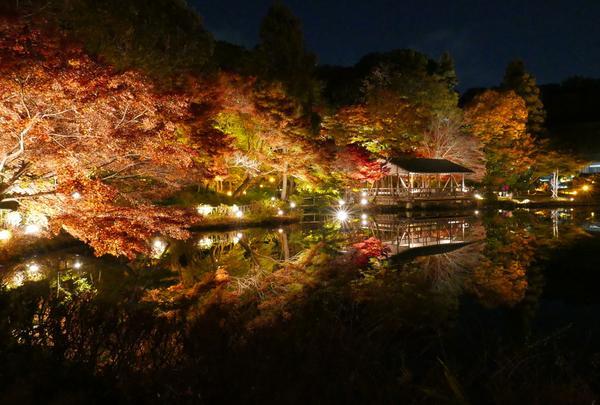 東山植物園ライトアップ