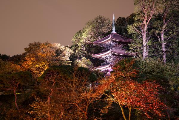 日本庭園夜のライトアップ