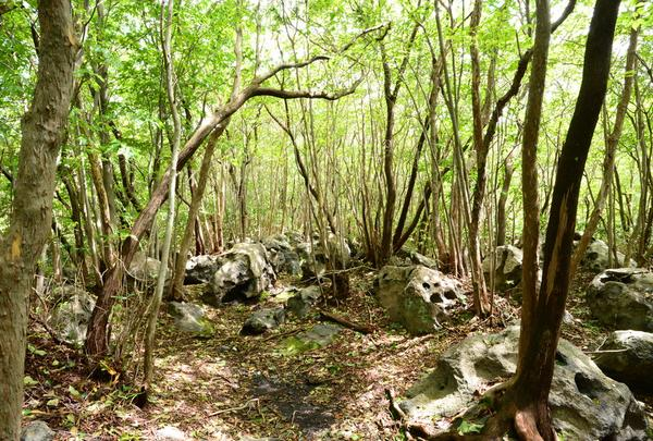 清流の森の写真・動画_image_45635