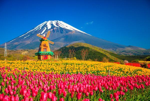 天空の花畑(遊園地ぐりんぱ内)