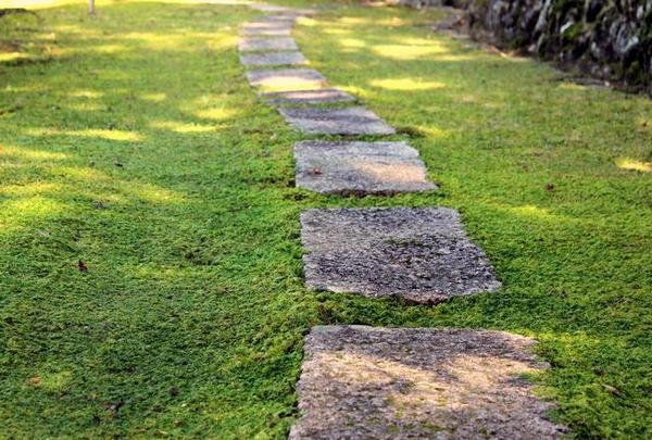 日本庭園 白龍園