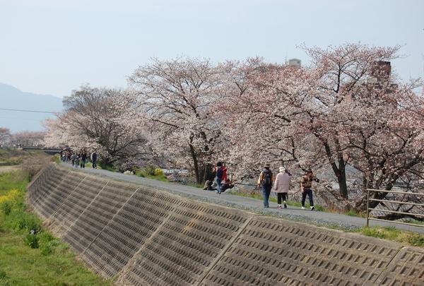 草津川緑地の写真・動画_image_132891