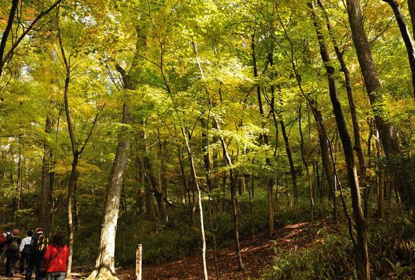 清流の森の写真・動画_image_152733