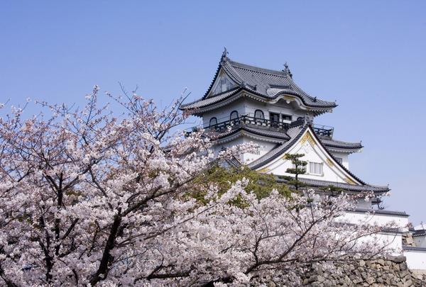 【花見スポット】岸和田城