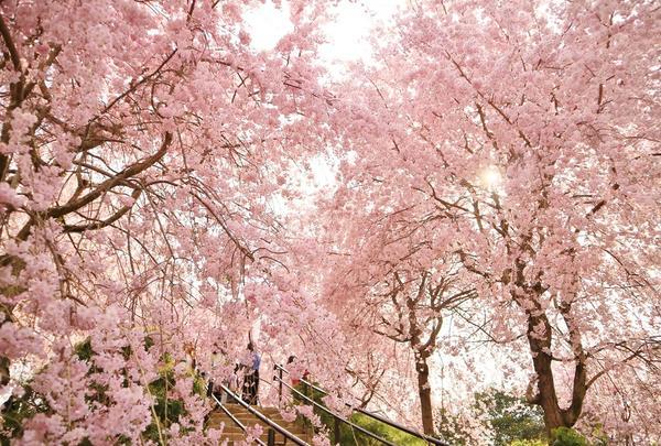 大神神社の写真・動画_image_308923