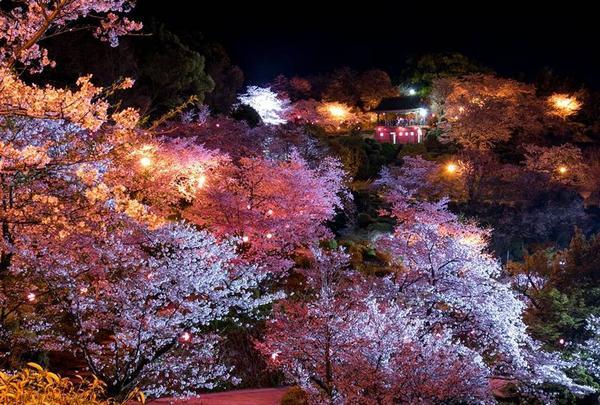 夜桜にうっとり♪