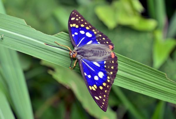 多種多様な昆虫‼