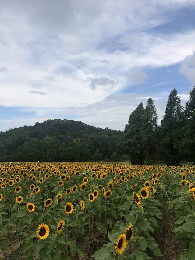 世羅高原農場